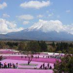 富士芝桜まつり2018!見頃や開花状況、アクセスは?