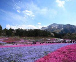 羊山公園の芝桜と武甲山