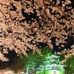 高田公園の桜2017!開花予想と満開予想は?駐車場情報など