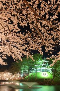 ピンクの桜とライトアップされた高田城三重櫓