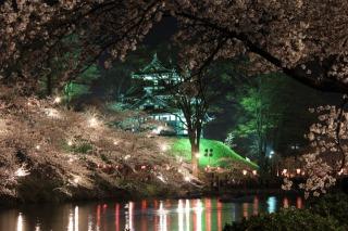ライトアップされた高田城三重櫓とピンクの桜