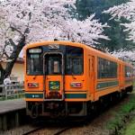 芦野公園の桜開花予想/2015年桜まつりの楽しみ方は?