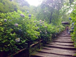 明月院、山門へ通じる鎌倉石の参道
