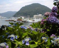 あじさいが咲く下田公園から港が見える