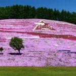 東藻琴芝桜公園の芝桜まつり2018!開花状況や見頃は?