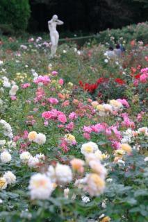 神代植物公園内に咲くバラと彫刻の競演