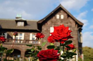 旧古河庭園の洋館と庭園に咲く赤いバラ