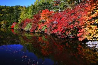 青苔荘から見る紅葉と白駒池