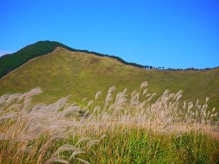 曽爾高原のすすきが風で揺れている