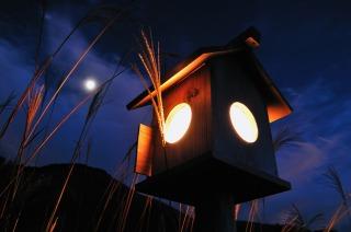 曽爾高原のすすき、日没後は灯籠の灯りで幻想的!