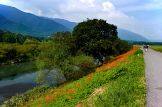 津屋川の彼岸花と養老山脈