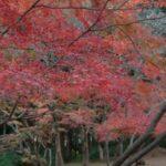 秋月の紅葉2017!見頃時期のお勧めスポットは?