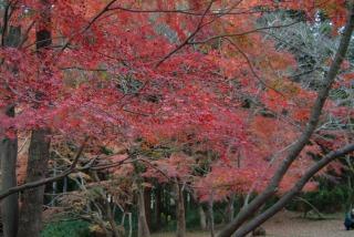 秋月城跡内の真っ赤な紅葉