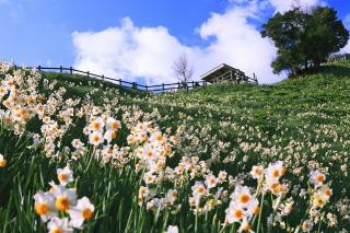 諭鶴羽山の山頂、展望台方面を見上げる