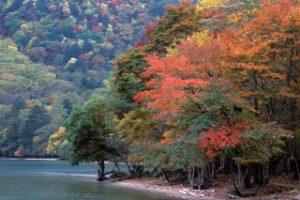 中禅寺湖畔の紅葉