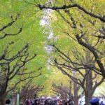 神宮外苑いちょう祭り2017!見頃期間やアクセスは?