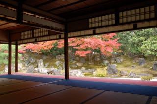 高台寺、庭園の紅葉