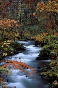 奥入瀬渓流に色づく紅葉