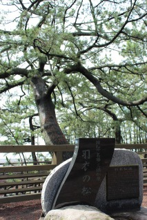 羽衣伝説の羽衣の松、御穂神社のご神体です