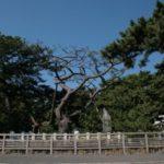 三保の松原へのアクセスは電車・バス・車?料金と駐車場は無料!?