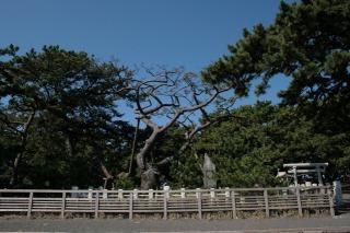 三保の松原で撮影するなら、羽衣の松
