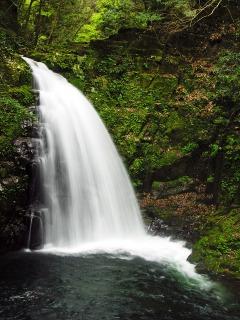 赤目四十八滝の不動滝、高さ15メートルです