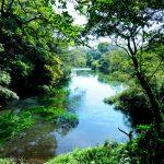 柿田川公園は湧水群!楽しみは水汲みや水遊び!アクセス・駐車場は?