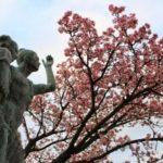 熱海桜まつり2017!見ごろや開花状況?見どころは?