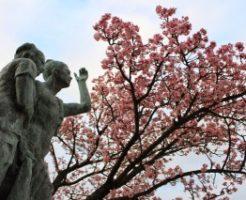 糸川沿いの熱海桜