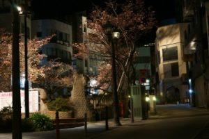 ライトアップされた糸川遊歩道の桜