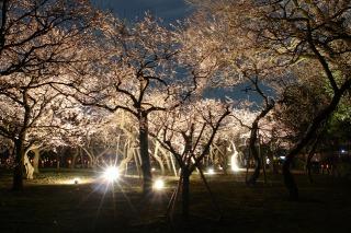 水戸偕楽園梅まつり、光の散歩道