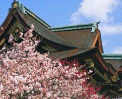 北野天満宮に咲く梅の花