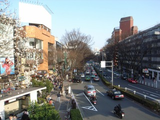 東京原宿の表参道