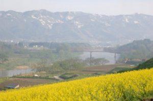 千曲川沿いの飯山市菜の花公園