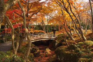 箱根美術館の池にかかる橋と紅葉