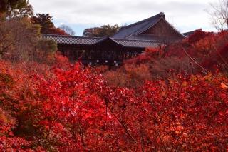 紅葉の見頃時期、オススメポイントは渓谷の2か所