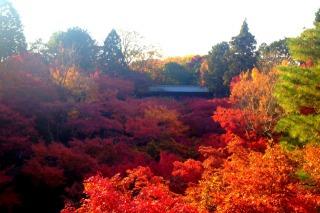 絶景ポイント・通天橋から見下ろす渓谷の紅葉